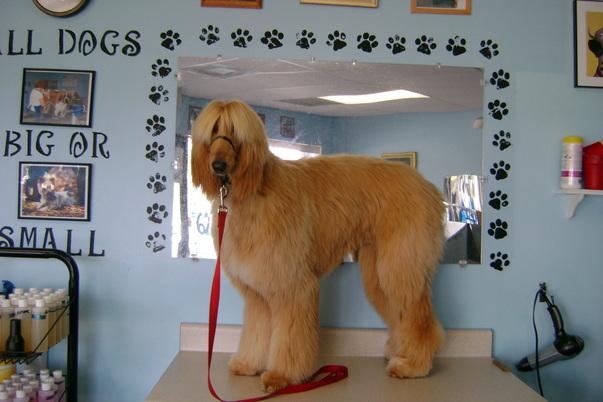 Photo gallery prefurred pet wash and grooming i know i am beautifulbut you can agree with me too solutioingenieria Gallery